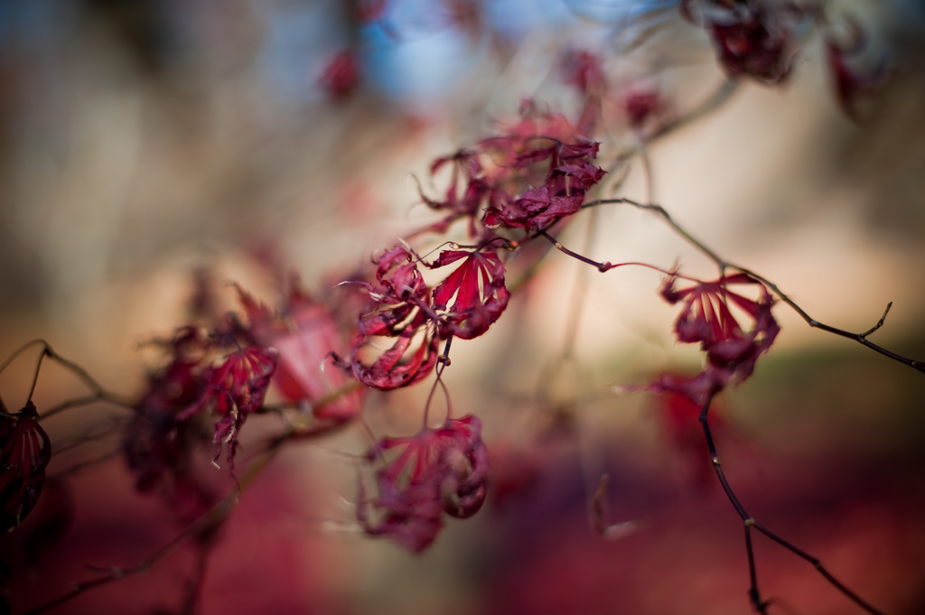 © Alexandra Roberts Photography