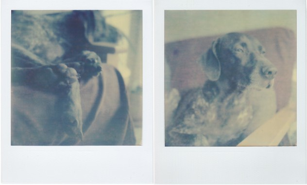 PX-70 film from the Impossible Project
