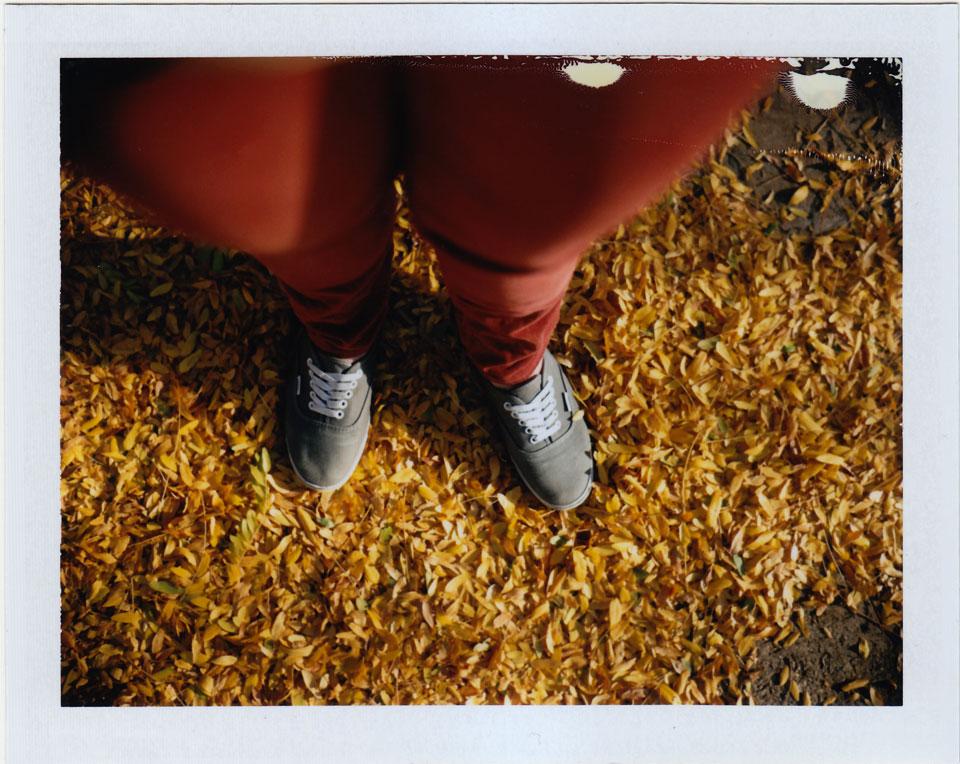polaroid leaves