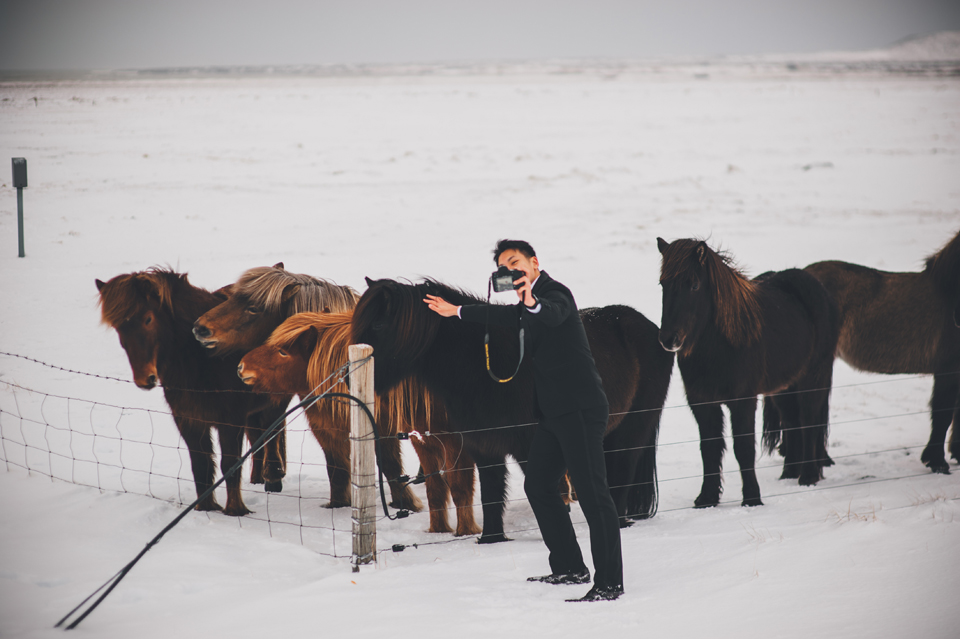 icelandic horse on snaefellsness